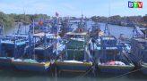 Kinh tế thủy sản 25-5-2020