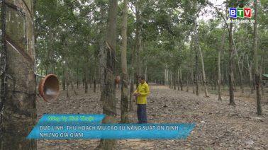 Nông vụ Bình Thuận 31-7-2020